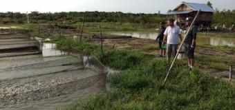 Tingkatkan Produktivitas Perikanan, Danrem 044/Gapo Tebar Bios 44 Di Kolam Ikan Dusun Setia Harapan Banyuasin
