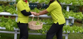 Persit KCK Koorcab Rem 044 Panen Sayuran Hidroponik