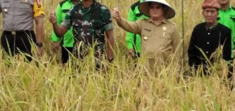 Dandim 0406/Mura Dan FKPD Muratara Panen Raya Padi Sawah