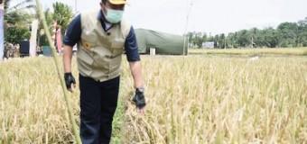 Kuatkan Sektor Pertanian, Pemprov Sumsel Rekrut 1000 PPL