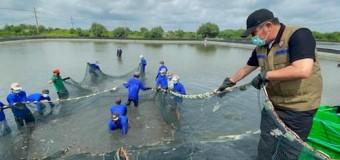 HD Wujudkan Impian Petambak Udang Sungai Menang dengan Program Listrik Masuk Tambak